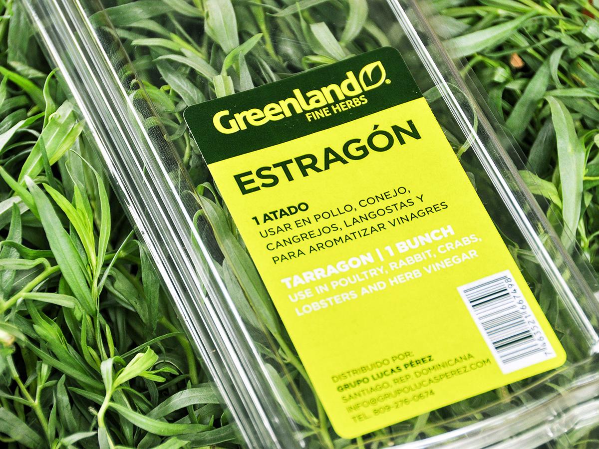 img-estragon