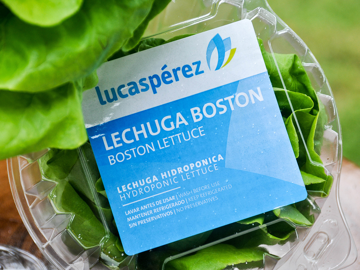 img-lechuga-boston